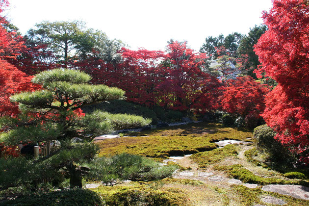どうだん亭の秋 苔の緑とモミジ、ドウダンツツジの紅葉がすばらしいコントラスト