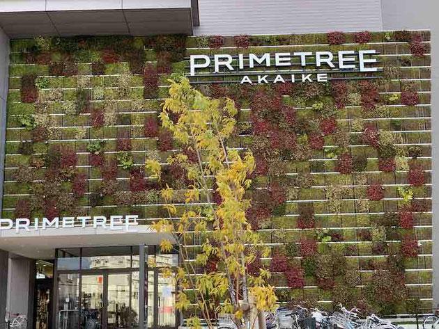 大きな壁面に色とりどりの植物が植えられている!大きい面積の壁面緑化だ!