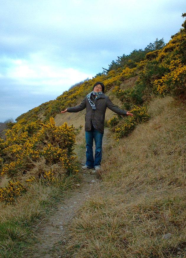 アイルランドはイギリスと植生が似ているので3月には黄色いハリエニシダが咲く。