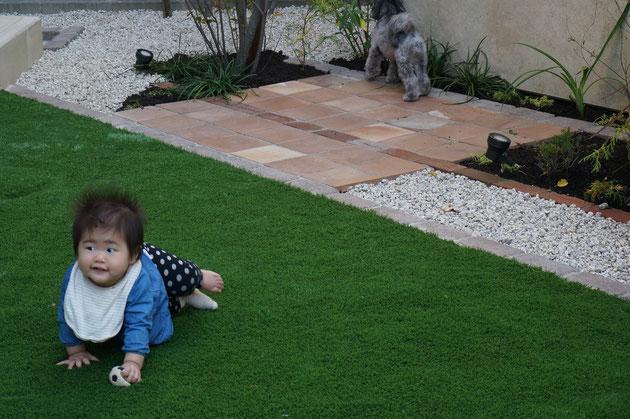 珠ちゃんも人工芝で遊ぶ!
