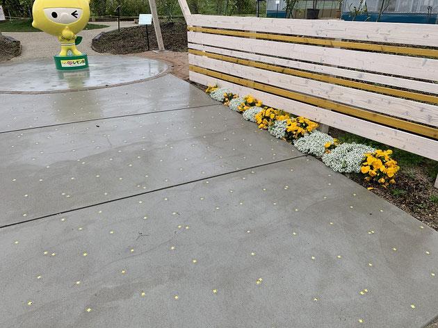 パンジーの黄色とレモンじゃの黄色、フェンスと床のタイルも黄色