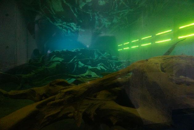 富山で見た埋没林!エヴァンゲリオンが出てきそう。