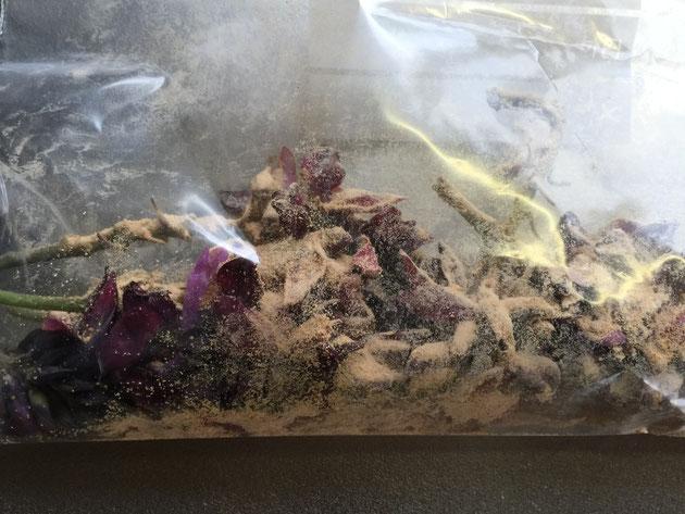 そのポリ袋の中に唐揚げ粉をまぶして、くずの花全体に粉がかかる様にする。