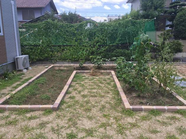 夏の家庭菜園の様子。キュウリ・ナス・枝豆!最高!