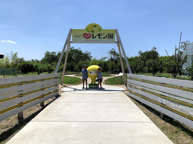 東谷山フルーツパークへ定期訪問!レモン園も元気です!