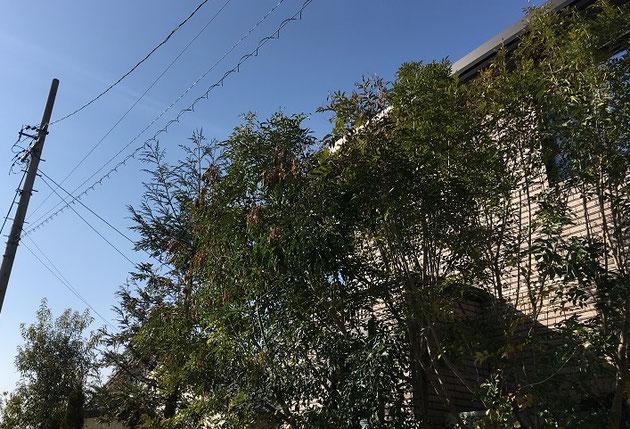 樹木の枝が電線に当たりそう