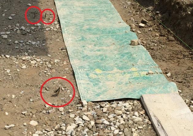 雨上がりの再生砕石敷きの床。砕石の中に入っているセメントガラの成分が水に溶け出しているから?