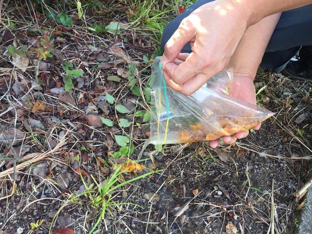 袋は出来るだけすぐに自然に帰る場所であけると良いと思います。