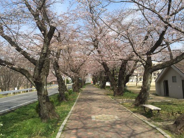 3分咲きの雨池公園。
