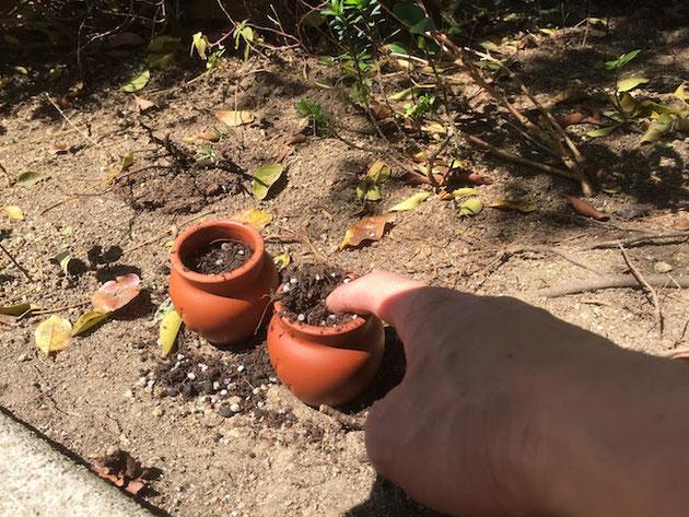 壷に一杯になった土を指で押さえます。