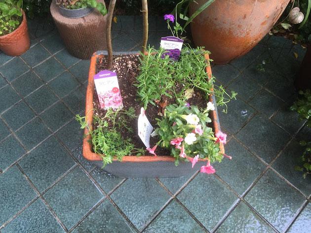 周りを汚さずに鉢植えを植え替える方法。