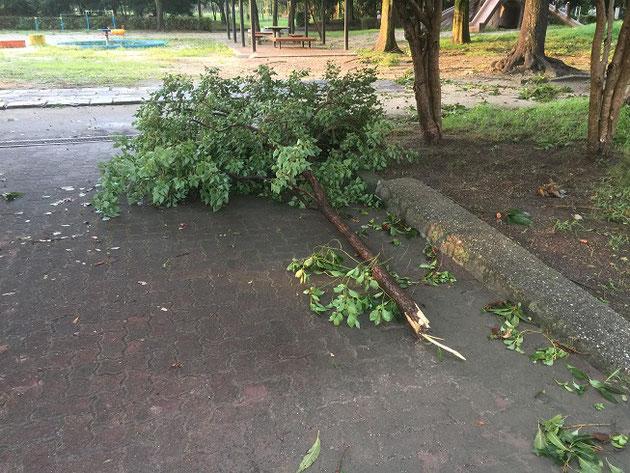 いつもの公園に落ちていた木の枝