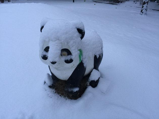 2016年1月20日の大雪のため公園で凍えているパンダちゃん。