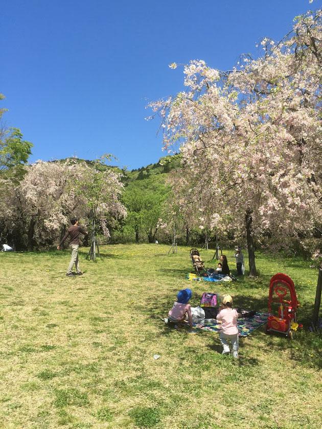 最高の天気に恵まれた日曜日にフルーツパークでピクニック。