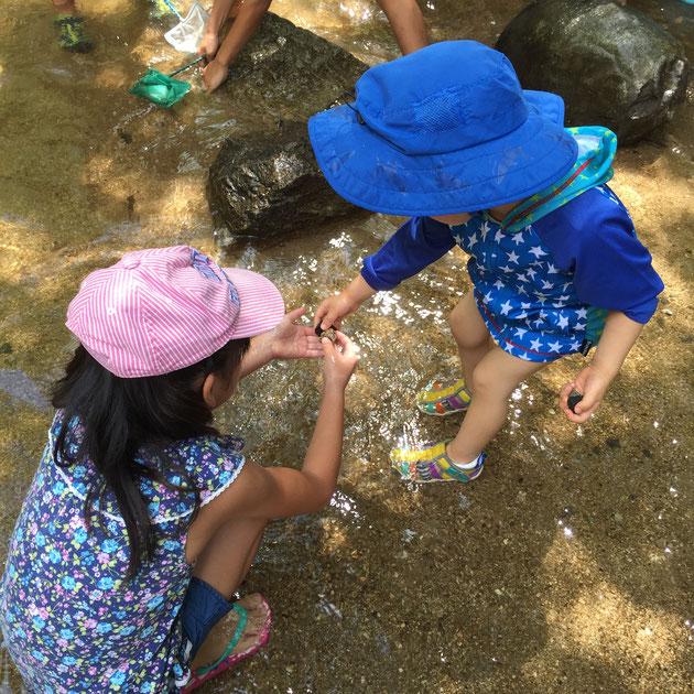 子供達はガーデンドクター柴ちゃんの取った巻貝二つでとても喜んでくれた。うれしい。
