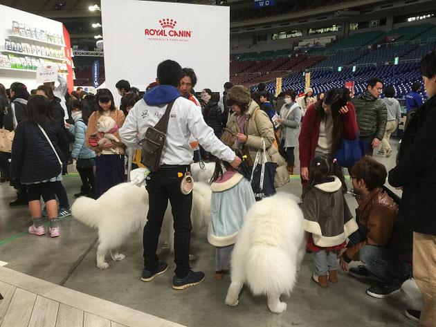 犬スマブースのアイドルのサクラとアル!この二人に人気は集中!