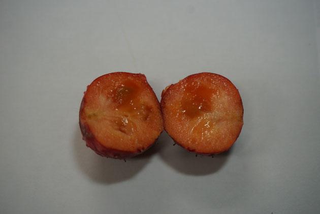 完熟したように見えるヤマボウシの実