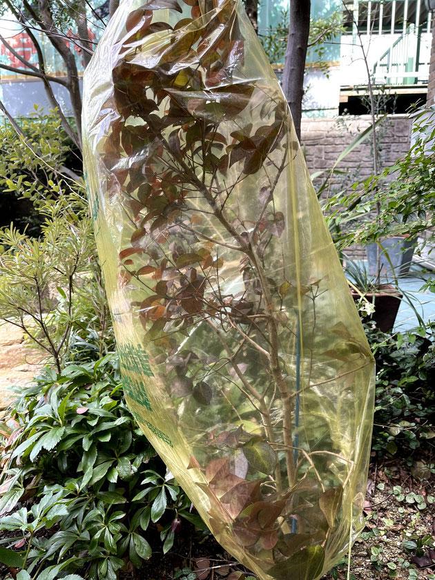 冬の寒さから植木を守る簡単な養生補法