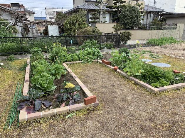 冬野菜が沢山の家庭菜園!