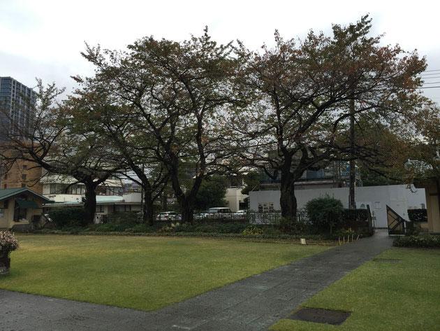 そして、もう一つの目玉はこの桜。桜の季節にもう一度訪れたいです!