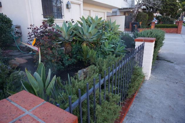 こちらの花壇は自動灌水システムがフル稼働中でした。