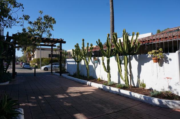 これだけ大きなサボテンが植わっているとメキシコ?と思うくらい雰囲気が出てくる