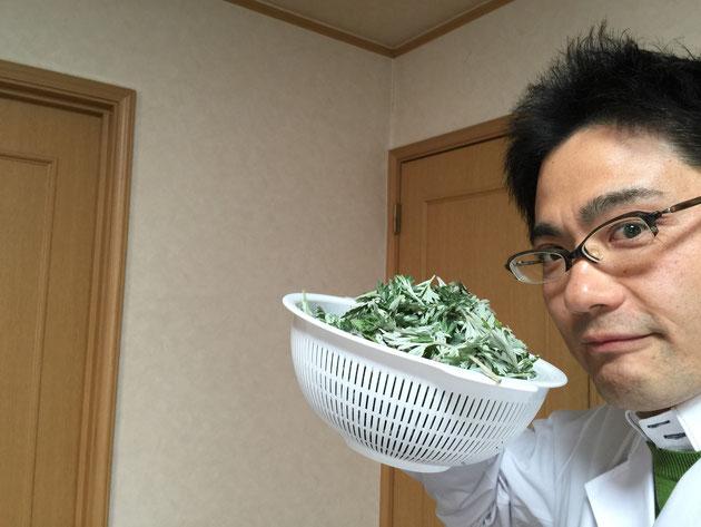 春になってガーデンドクター柴ちゃんも復活!今回はヨモギを食べる!!!