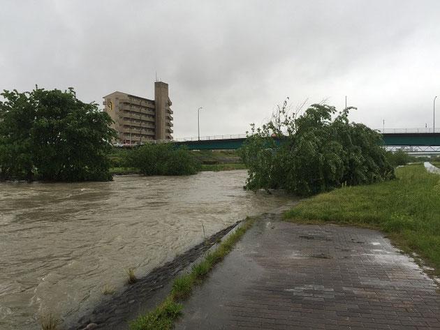 川下も凄い勢いで流れている