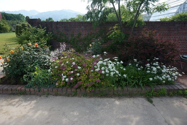 高いレンガ造の壁の中には植物でボーダーガーデンが作られていました こういう植物の組み合わせは勉強になりますね