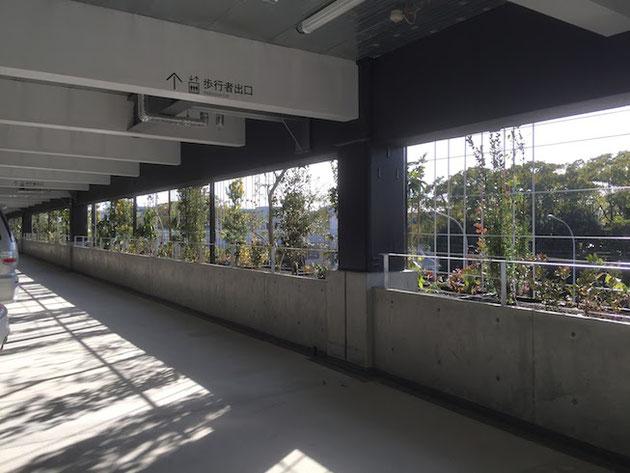 金城埠頭駐車場の外壁面はしっかりと植栽が出来るスペースが確保されていた。