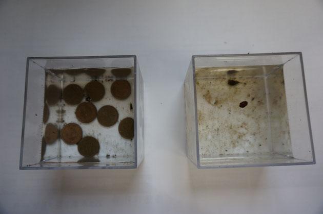 二つの容器を見比べてみると10円玉を入れた容器のほうが汚れが少ないように見える。