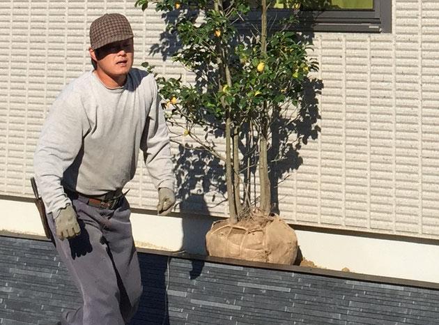 いつもお願いしている吉田正果園の井端さん。腕は確かで超力持ちです!