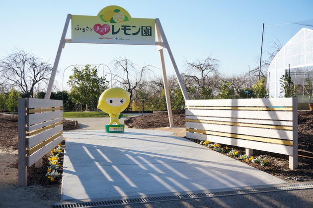 今回は東谷山フルーツパークに植わっているレモンの品種の研究です!