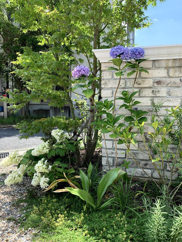 洋風の外構に合うレンガ門塀と植栽。アジサイがかわいい