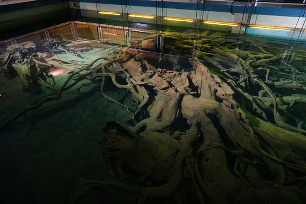 水中展示など凄い展示が!埋没林は水のなかでも朽ちないそうです。