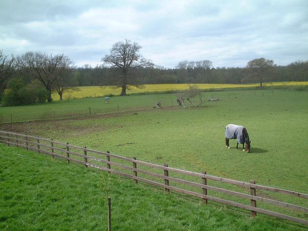 これはガーデンドクター柴ちゃんが住んでいたイギリスのお家の農場