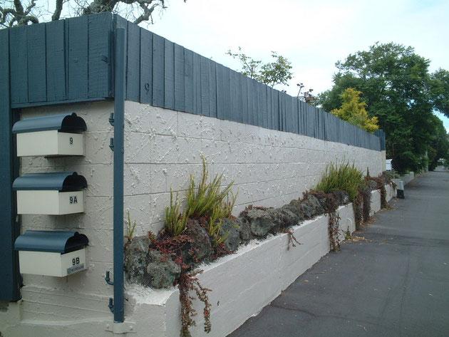 ニュージーランドの海辺に有った植栽。