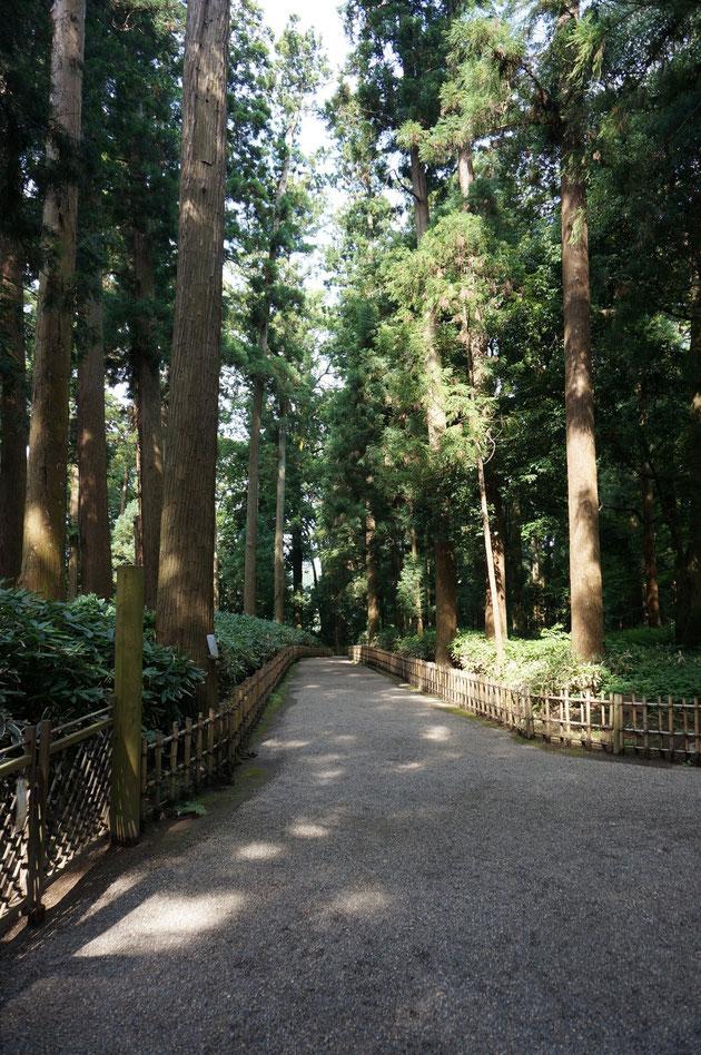 太郎杉から仲の門へいくまでは杉の林の中を通って行く。