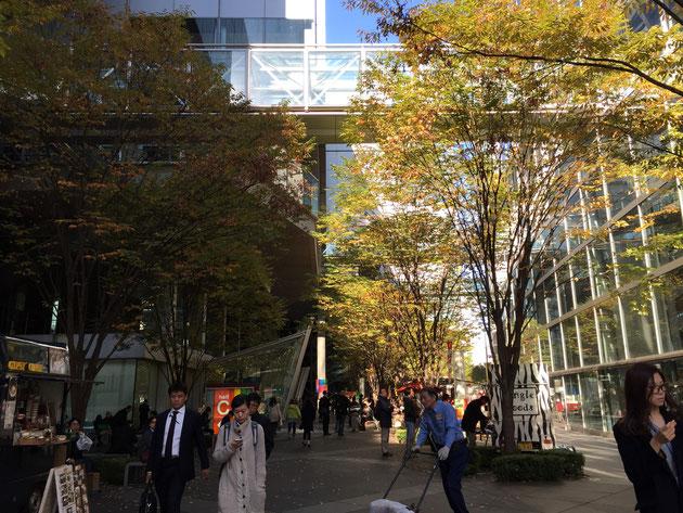 東京国際フォーラムの中庭に植えてあるケヤキの下には、移動販売の車やベンチなどがあって憩いの場になっていた。