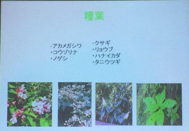 糧葉。食べる糧(かて)になる植物の葉。