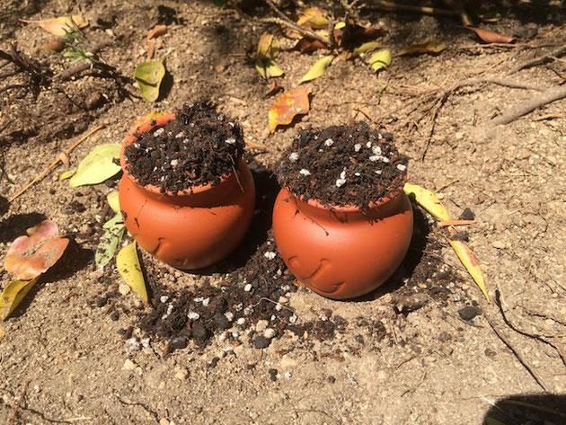 壷プリンの壷にもりもり土をいれます。