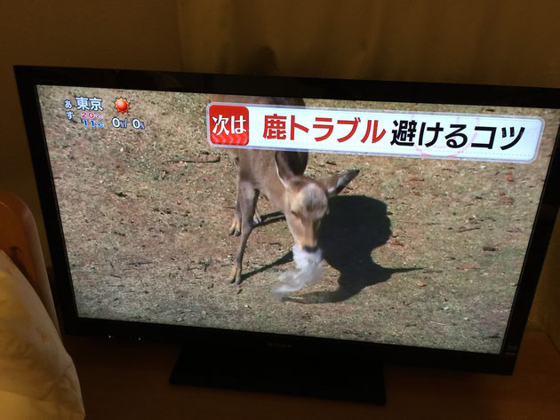 奈良公園のシカが観光客とトラブルになっていると話題になっていました。