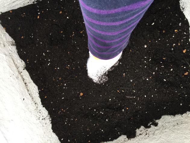 園芸用の土を大型プランターに入れる。入れた後はある程度締め固める。