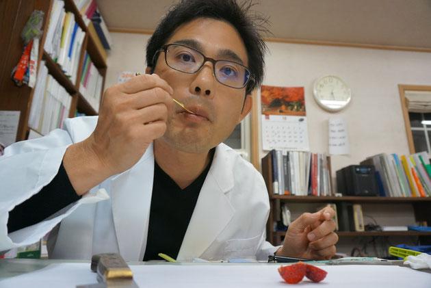 ヤマボウシの実をぱくりと頂くガーデンドクター柴ちゃん