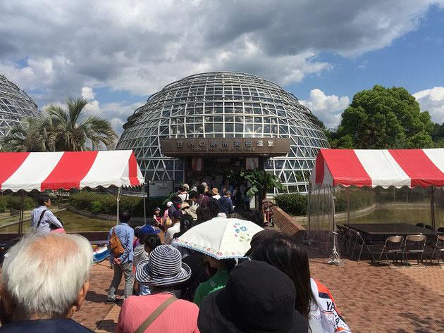 世界の熱帯果樹温室で行われたドリアン試食会!