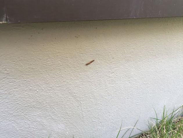 庭での困りごとの一つに害虫の発生がある。