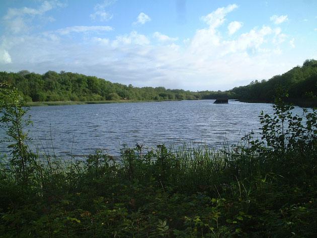 会社の直ぐ隣にあった湖。よく考えたら凄い環境だ!