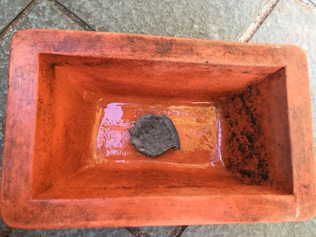 鉢底にはBBQのときに使い終わった炭を入れた。