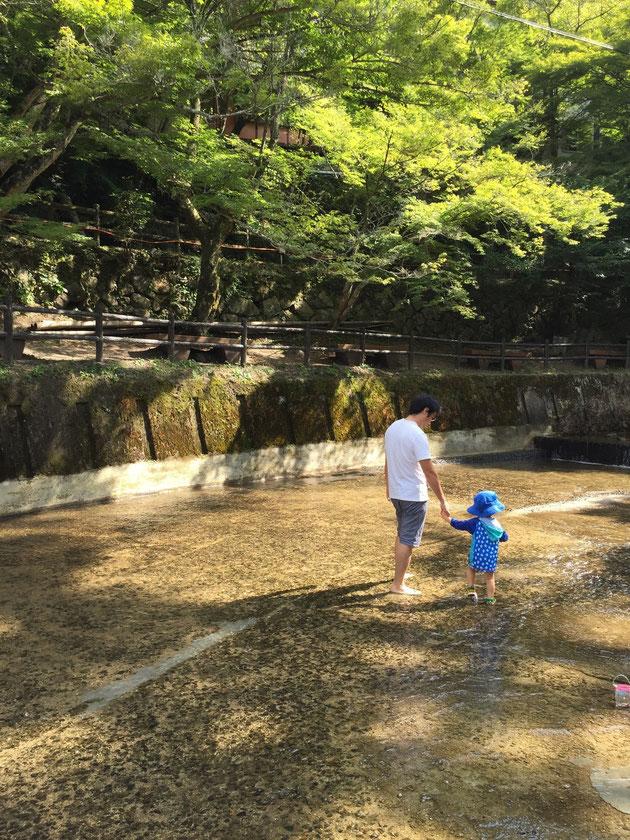 午前八時に岩屋堂公園の中を流れる川で水遊びをするガーデンドクター柴ちゃん