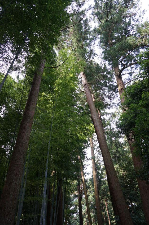 現代を生きていて、このような場所に来る事は無い。水戸と言う街の中にこの豊かな森があるという事実は未来へ繋いで行かなければならない。